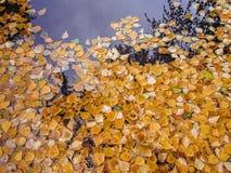 Осень Справочная информация Стоковое Изображение RF