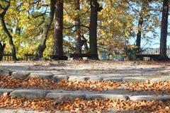 Осень среди деревьев Стоковые Изображения