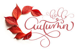 Осень текста литерности каллиграфии здравствуйте! Листья красного цвета на белой предпосылке Стоковая Фотография