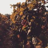 осень Тоскана стоковая фотография