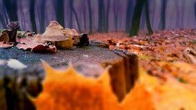осень туманнейшая Стоковая Фотография RF