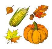 Осень тыквы и жолудей изолировала вектор значков бесплатная иллюстрация
