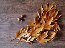 осень украшает офис деталей домашний идеально Стоковые Изображения RF