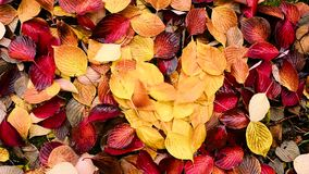 Осень, упаденные листья акции видеоматериалы