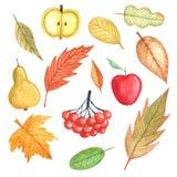 Осень, установила листья осени и приносить акварель на белой предпосылке Иллюстрация штока