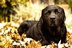 Осень Фред Стоковое фото RF