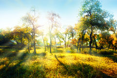 осень цветастая Стоковая Фотография RF