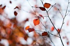 осень цветастая Стоковое Изображение RF