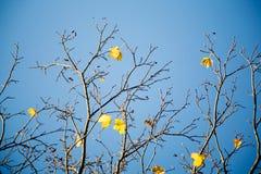 осень цветастая Стоковое Фото