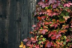 осень цветастая Стоковое фото RF