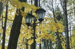 осень цветастая Bbackground Стоковая Фотография