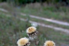 Осень - цветки луга разбрасывают их семена стоковые изображения