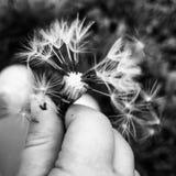 Осень Цветок стоковое изображение rf