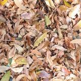 Осень чувствует Стоковые Изображения