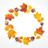 осень яблока миражирует листья состава сухие sacking ваза Венок сделанный из листьев осени Плоское положение, взгляд сверху, косм стоковое изображение