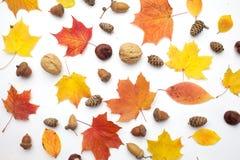 осень яблока миражирует листья состава сухие sacking ваза Осень высушила листья на белой предпосылке Плоское положение, взгляд св стоковые изображения rf