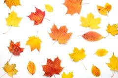 осень яблока миражирует листья состава сухие sacking ваза Осень высушила листья на белой предпосылке Плоское положение, взгляд св стоковое фото
