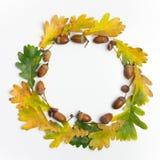 осень яблока миражирует листья состава сухие sacking ваза Рамка сделанная листьев осени и конусов сосны на белой предпосылке Плос Стоковые Изображения