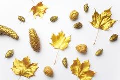 осень яблока миражирует листья состава сухие sacking ваза Рамка сделанная из листьев осени золотых на свете - серой предпосылке П стоковая фотография rf