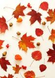 осень яблока миражирует листья состава сухие sacking ваза осень содержит путь листьев рамки архива Стоковое Изображение RF
