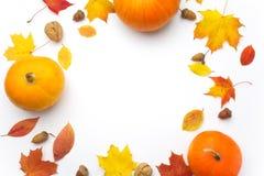 осень яблока миражирует листья состава сухие sacking ваза Тыквы, высушенные листья на белой предпосылке удерживания halloween дат стоковая фотография rf