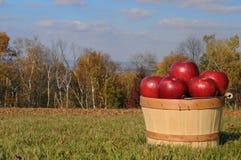 осень яблок Стоковые Изображения