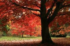осень яблока миражирует листья состава сухие sacking ваза Стоковое Фото