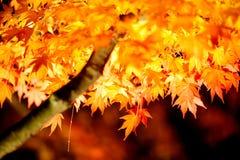 осень япония освещает вверх Стоковые Фото