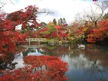 осень япония Стоковая Фотография