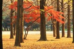 осень япония Стоковое фото RF