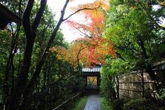 осень япония Стоковая Фотография RF