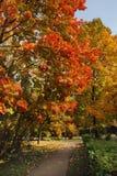 осень яркая Стоковая Фотография RF