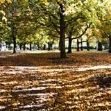 осень 01 Стоковая Фотография RF
