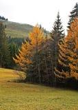 осень 08 стоковое изображение