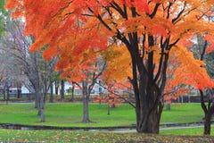 осень Стоковые Фото