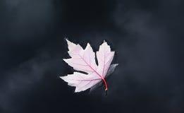 осень 2011 Стоковые Фотографии RF