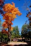 осень 21 золотистая Стоковое фото RF