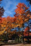 осень 22 золотистая Стоковые Фото
