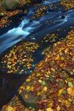 осень 3 стоковая фотография