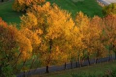 осень 4 золотистая Стоковая Фотография RF