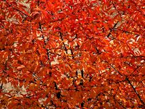 Осень Стоковые Изображения RF