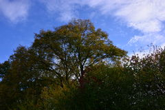 Осень Стоковое фото RF
