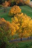 осень 5 золотистая Стоковое Изображение RF