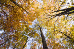 Осень Стоковая Фотография