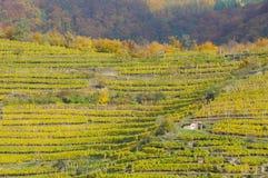 осень 6 отсутствие виноградника Стоковое фото RF