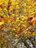 Осень Стоковое Изображение