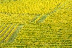 осень 9 отсутствие виноградника Стоковое фото RF