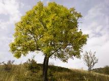 осень alps Стоковые Фотографии RF