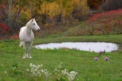 осень appaloosa стоковая фотография