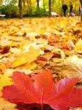 осень berlin Стоковые Изображения